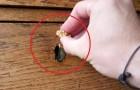 Il passe une noix sur un meuble en bois: le résultat est impressionnant