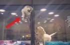 Parece que un gatito esta huyendo de su box...pero el proximo movimiento es totalmente inesperado