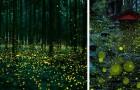 In diesem Wald in Japan vollzieht sich jeden Sommer ein märchenhaftes Spektakel. Hier einige Bilder