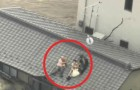 They refuse to leave their dogs behind --- Watch the dramatic rescue!