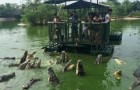 Video  Coccodrilli