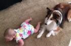 La bebe no logra gatear, pero luego de la enseñanza de su perro...todo cambia!