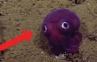Knallige Farben und weit geöffnete Augen: hier das Weichtier, das aus einem Trickfilm zu stammen scheint