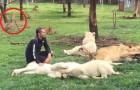 Video Leopardenvideos Leoparden