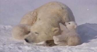 Um amor de família polar