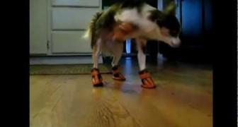 Divertida copilaciòn de animales con zapatos