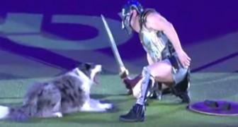 Die Fähigkeiten dieses Hundes und dessen Dompteur übertreffen jede Vorstellung: hier spielen sie ein Duell zwischen Gladiatoren