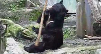 El oso Kung Fu