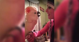 El papagallo esta enojadisimo:  la charla que le hace a la patrona es de no creer!