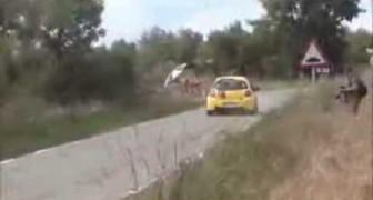 Coniglio vs Rally