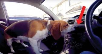 I cani non amano stare in macchina? Guardate questo video e vi ricrederete!