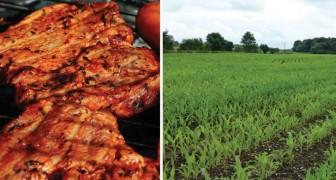 Cosa accadrebbe a noi e alla Terra se domani tutti smettessimo di mangiare carne?