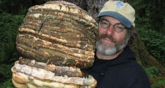 Er hat ein natürliches Insektizid gefunden, welches den Planeten retten könnte. Wir erklären euch, warum niemand davon spricht