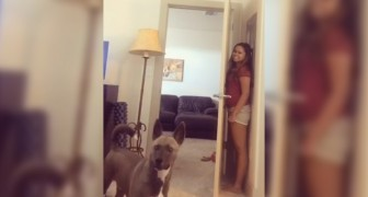 She plays a hilarious game of hide-and-seek with her dog!
