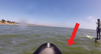She goes out on a paddle board -- look what happens! Wow!
