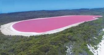 Het prachtige roze meer van Middle Island: dit zijn de prachtige beelden van een drone die over het meer vliegt