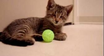O gatinho cego e sua primeira brincadeira