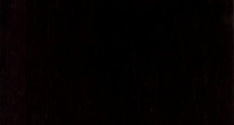 Een Museum Bewaart 60 Jaar Lang Fossielen In Een Kast, Waarvan Er Wordt Ontdekt Dat Hem Een Dier Van Recordgrootte Gaat