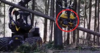 Das was diese Maschine kann, ist einfach unglaublich: achtet auf den Baumstamm!