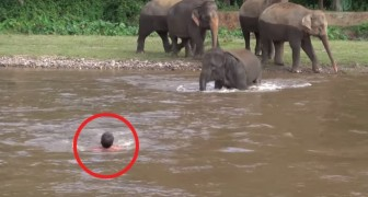A man falls into the water --- and the elephant?!