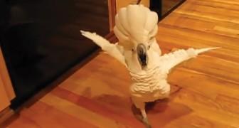 Ha fatto arrabbiare il suo pappagallo, ed ora il pennuto... gliene dice quattro!