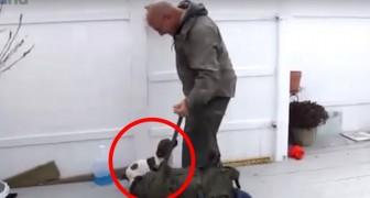Los perros reconocen el regreso de los soldados