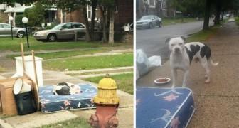 La famiglia trasloca e lo lascia indietro: il cane dorme sul loro letto per oltre un mese