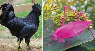 Follie della Natura: 20 animali che non pensavi potessero esistere in queste varianti