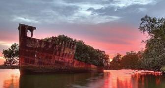La natura si riprende i suoi spazi: ecco la nave abbandonata che è divenuta una splendida foresta