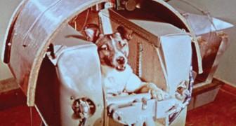 La vraie histoire derrière la mort de Laika, la petite chienne sacrifiée au nom du progrès