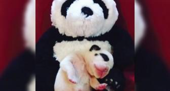 Un cucciolo di cane cerca le coccole della mamma: la scena è TROPPO dolce!
