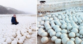 Migliaia di palle di neve hanno invaso la Siberia. Cosa si nasconde dietro questo bizzarro fenomeno?