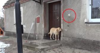 Er möchte wieder ins Haus, aber keiner öffnet: seht zu was er dann fähig ist!