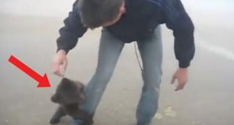 Er trifft auf einen kleinen Bären auf der Straße: so reagiert das Tier als es ihn sieht