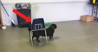 Questo simpatico cane è più intelligente di quanto sembri: non giudicatelo dalle apparenze!