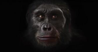 200.000 ans d'évolution humaine en 90 secondes: un vrai spectacle!