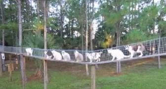 Chiama i gatti a raccolta per la colazione: ecco cos'ha costruito per proteggerli dalla strada