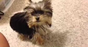 El cachorro mas inteligente...increible!!