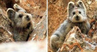 Avvistato per la prima volta dopo 20 anni il Coniglio magico: ecco tutti i segreti di questo rarissimo animale