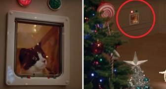 La Navidad visto desde un gato: esta es la publicidad que centra A LA PERFECCION todo aquello que sucede