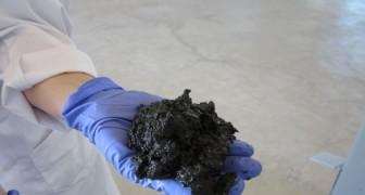 Trasformare i liquami in petrolio: un gruppo di ricercatori scopre come fare