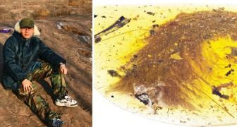 Trova un fossile del Cretaceo in un pezzo d'ambra: ecco perché si tratta di una scoperta sensazionale