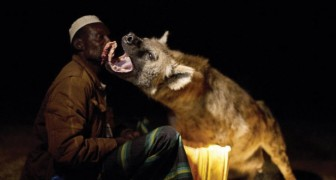 Bienvenue à Harar, la seule ville au monde où les hyènes sont les bienvenues