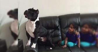 La mamma rientra in casa e trova la figlia insieme al pitbull... In una scena esilarante!