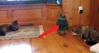 Il gatto si avvicina all'albero incuriosito: lo scherzo che lo aspetta lo fa quasi morire di paura!