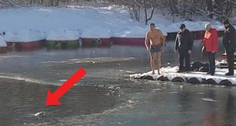 A courageous man saves a dog drowning in a frozen lake!