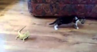 Gattino contro lucertole