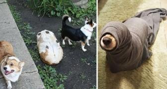Mettersi nei guai: ecco 23 cani che lo hanno fatto in maniera adorabile