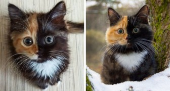 Quand Mère Nature fait une création d'art: voici la chatte à la coloration unique!