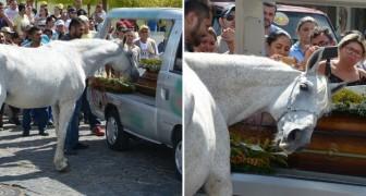 Dit paard wordt naar de begrafenis van zijn eigenaar gebracht: de reactie van het dier is hartverscheurend!